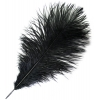 "Ostrich Drab Feathers 6-8"" Premium Quality Black"